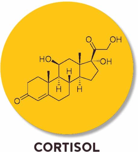 cortisol stress